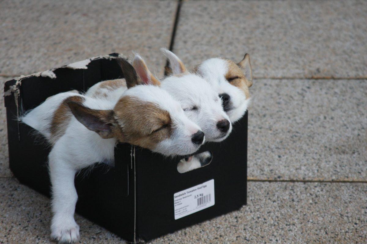 Drei schlafende Hunde